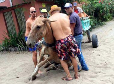 Maus-tratos: Cavalo cai e não levanta por não suportar peso de carroça
